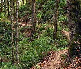 Portland Area Hiking